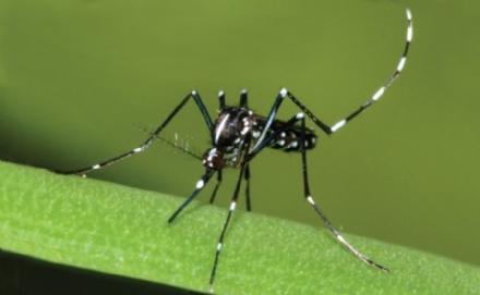 DRUENTO - Doppio trattamento anti-zanzare fra agosto e settembre
