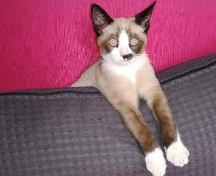 DRUENTO - Smarrito il gattino Ugo: i proprietari lanciano lappello