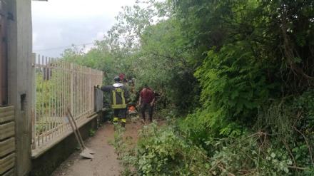 RIVOLI - Maltempo: crolla un albero, sei famiglie restano isolate