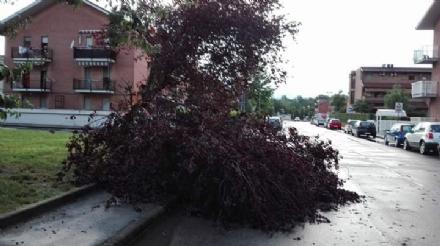VENARIA-SAVONERA-DRUENTO-GIVOLETTO - Maltempo, strade allagate e decine di alberi caduti