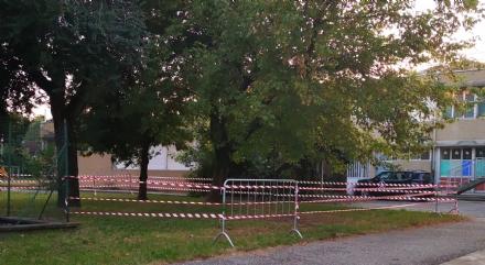 VENARIA - Lalbero dentro la scuola è pericolante: larea è stata transennata