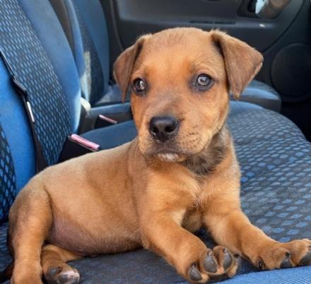 VENARIA - Cucciolo di cane abbandonato sulle rive del Ceronda: salvato grazie a due giovani