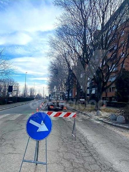 VENARIA - Dopo sei anni, vengono potati gli alberi in via Di Vittorio
