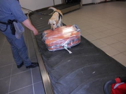 CASELLE - Foglie di cocaina nascoste dentro la valigia: denunciata una donna