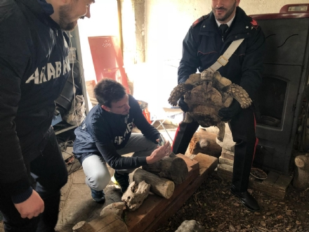 RIVOLI - Traffico illegale di specie animali protette: sequestrate 10 tartarughe ad un 46enne