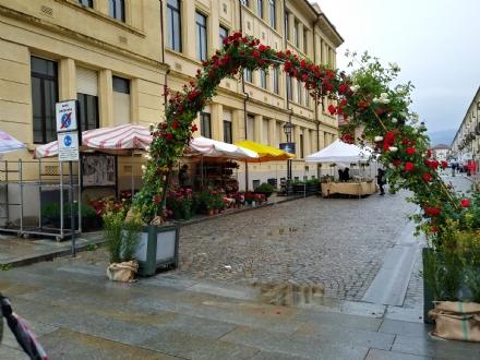"""VENARIA - Un week-end con la """"Festa delle Rose», nonostante la pioggia: il programma completo"""