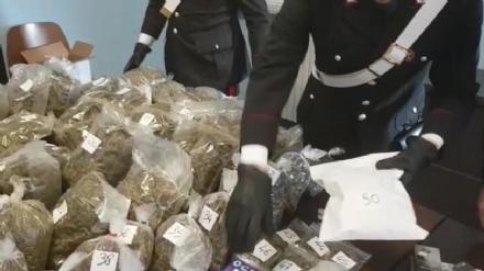 VAL DELLA TORRE - Cani e telecamere per difendere 12 chili di droga: 25enne arrestato