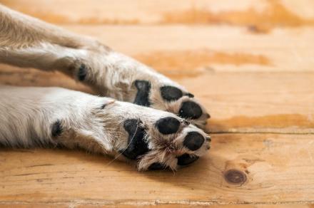 TRAGEDIA A RIVOLI - Viene morso dal cane: lo uccide con delle coltellate e lo brucia
