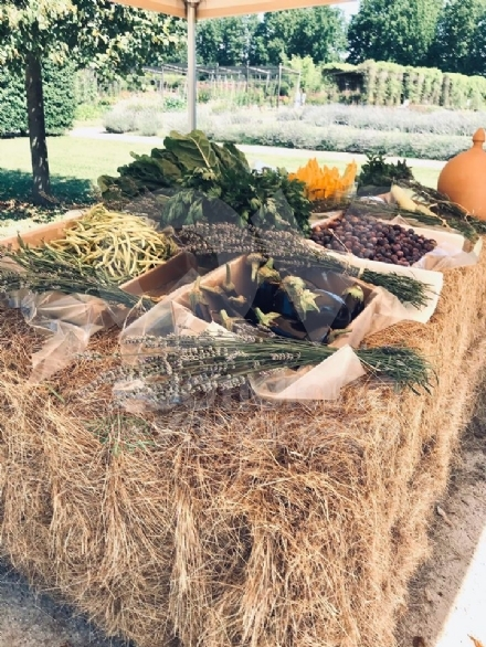VENARIA - Nuova iniziativa alla Reggia: visiti i Giardini e porti a casa frutta e verdura