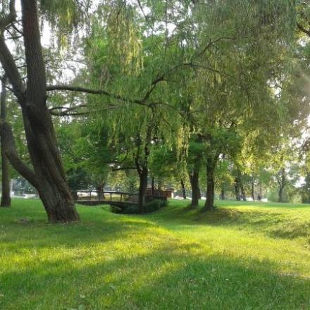 TRAGEDIA - Si impicca ad un albero: muore suicida una studentessa di soli 15 anni
