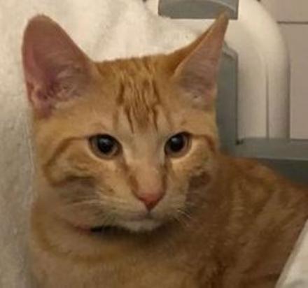 VENARIA - Disavventura a lieto fine: il gatto «Rossetto» è stato ritrovato