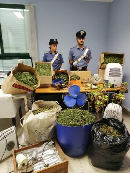 MATHI - Venti chili di marijuana e tre piantagioni: i carabinieri arrestano un 55enne