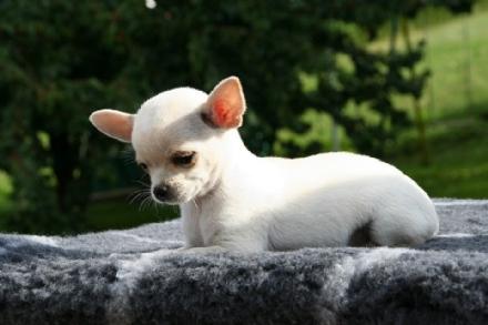 GIUDIZIARIA - Getta il cane dal terzo piano dopo un litigio: indagati per uccisione danimale