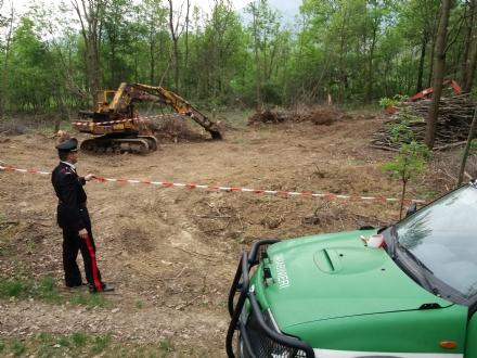 PIANEZZA - VAL DELLA TORRE - Distrutto un bosco per cambiare destinazione duso del suolo: denunciato