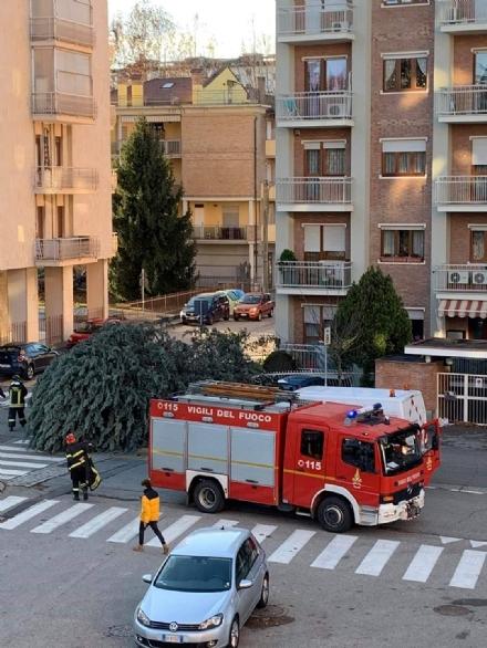 ZONA OVEST - Raffiche di vento: alberi caduti a Collegno, Pianezza, Givoletto e San Gillio