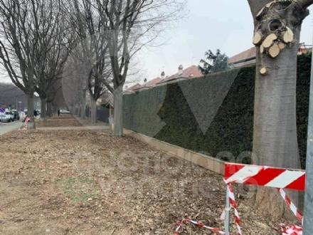 VENARIA - Problema alberi in via Barbi Cinti: i Verdi dicono «no» al taglio
