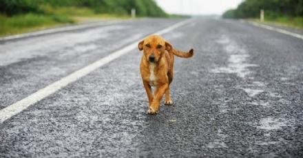 GIVOLETTO - Cane investito da unauto pirata: morto prima di arrivare in clinica veterinaria