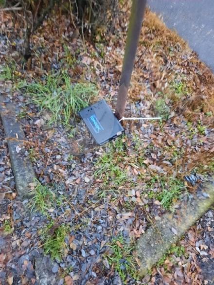 VENARIA - Proliferazione di topi in città: il Comune interviene con una derattizzazione urgente
