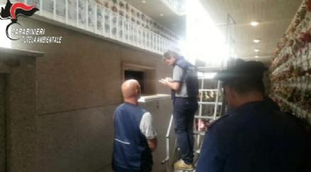 RIVOLI-GRUGLIASCO - Gettavano rifiuti negli ossari dei cimiteri: denunciato il titolare di una cooperativa