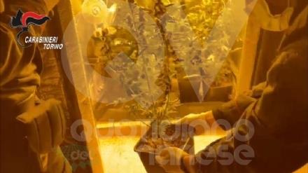 VENARIA - Due donne denunciate per possesso di droga: in manette il loro fornitore