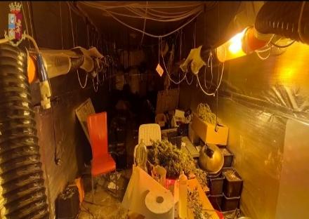 FIANO - Nel capannone si coltivava la cannabis: tre arresti e 800 piante sequestrate