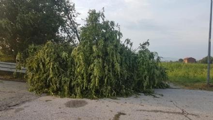 VENARIA-BORGARO-CASELLE-MAPPANO - Maltempo: tetti scoperchiati e alberi abbattuti