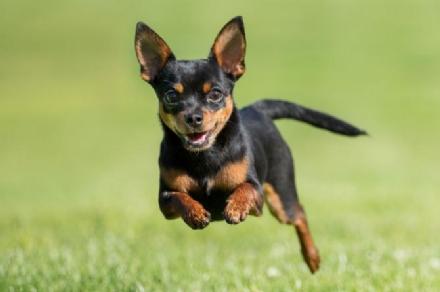 CRONACA - Uccide il cane della moglie gettandolo dal terzo piano
