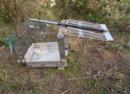 BORGARO - Catturava mini lepri nel parco Chico Mendes: denunciato bracconiere 77enne