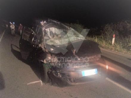 SAN GILLIO - Incidente stradale: auto prende in pieno due cavalli. E li uccide