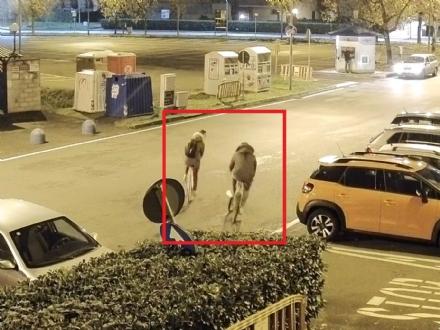 BORGARO - Ladri di biciclette subito identificati dalla polizia municipale