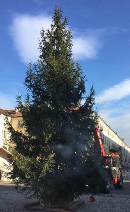 VENARIA - Il grande albero di Natale è arrivato in piazza dellAnnunziata