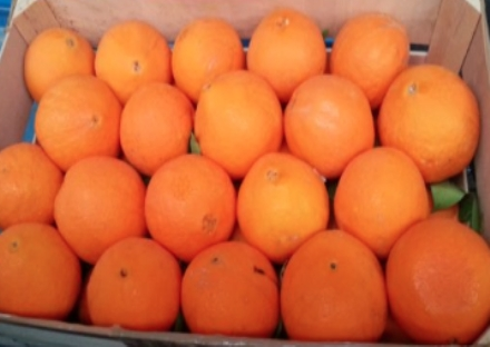 VENARIA - Anche nella Reale arriva la «truffa della frutta»