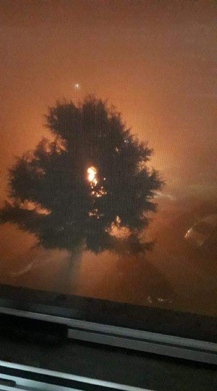 MAPPANO - A fuoco undici cassonetti dei rifiuti in via Torazza: danneggiata unauto