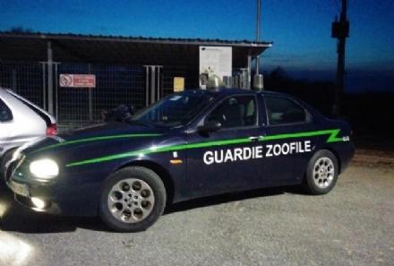 VENARIA REALE - Maltrattamenti sugli animali: controlli delle guardie zoofile in città