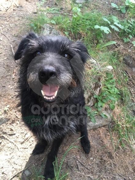 DRUENTO - Il cane vaga per la città e i civich multano il proprietario: 100 euro di sanzione