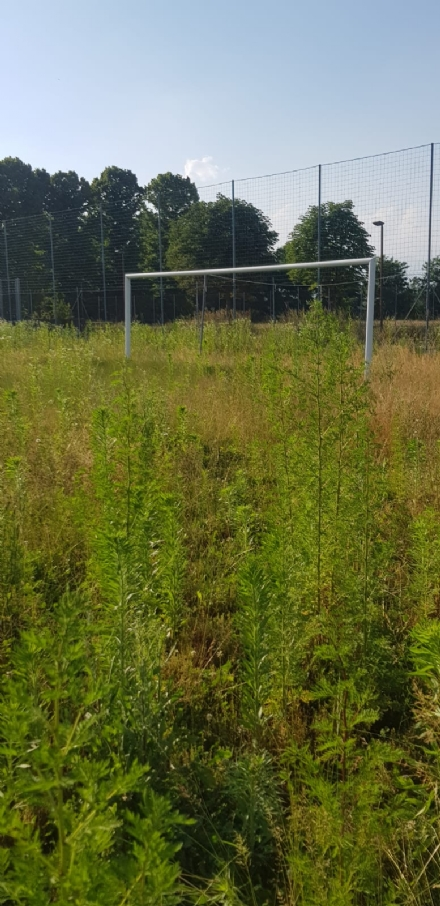 VENARIA - Muri pericolanti ed erba alta: degrado nel campo «naturale» del Don Mosso