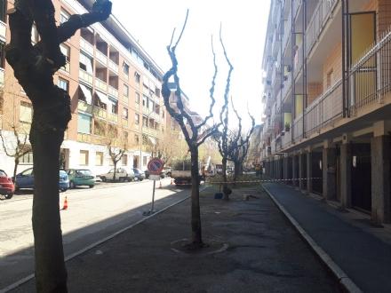 VENARIA - Dopo le proteste, potati gli alberi in via Sciesa