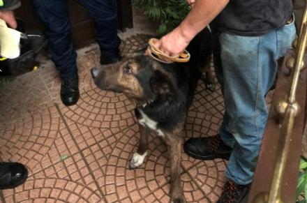 CIRIE-VAL DELLA TORRE - I proprietari sono in ferie: il cane rimane a casa. Salvato dai vigili