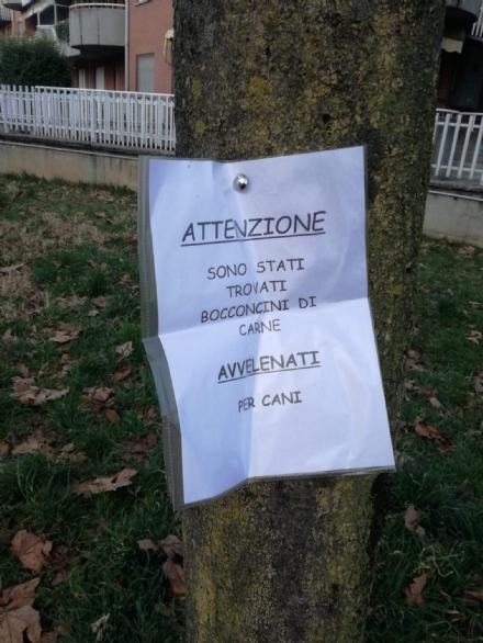 VENARIA - Allarme bocconi avvelenati in città: cosa fare in questi casi