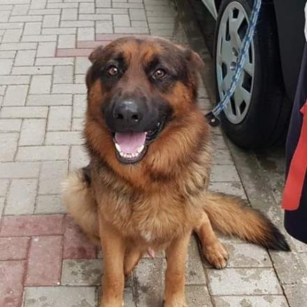 DRUENTO - Cucciolo di cane morto per avvelenamento