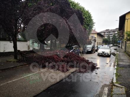 VENARIA - Pioggia e vento fanno cadere un ramo sopra ad unauto parcheggiata: strada chiusa