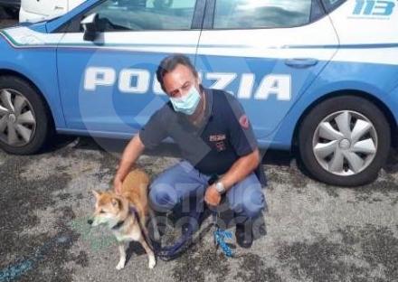 RIVOLI - Il cane scappa dalla propria abitazione, la polizia lo trova e lo riconsegna al proprietario