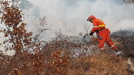 VAL DELLA TORRE-GIVOLETTO - I carabinieri confermano: gli incendi boschivi erano dolosi