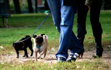 VENARIA - In aumento le multe per chi non raccoglie i bisogni dei propri cani