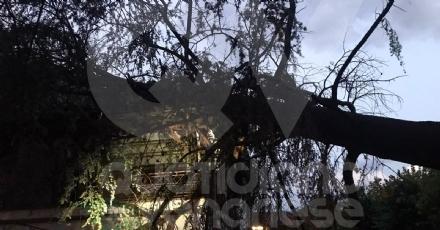 MAPPANO - Il forte vento fa cadere un albero di grosso fusto su una casa in via Meucci