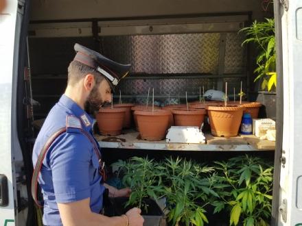 RIVOLI - In casa una serra per produrre cannabis