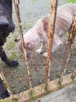 CASELLE - Abbandonati, senza cibo da venti giorni e feriti: salvati due cani - immagine 10