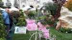 VENARIA - «Festa delle Rose»: un successo a metà per colpa della pioggia - immagine 10