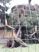 VENARIA - MALTEMPO: Parte la conta dei danni. Sopralluogo del sindaco in tutta la città - immagine 14
