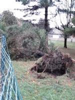 VENARIA - MALTEMPO: Parte la conta dei danni. Sopralluogo del sindaco in tutta la città - immagine 15